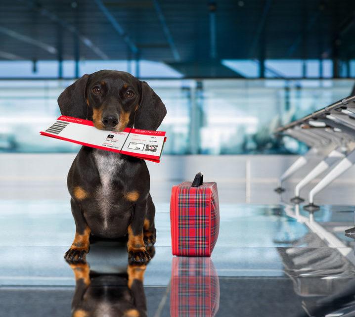 Quelles précautions prendre pour voyager avec son chien?