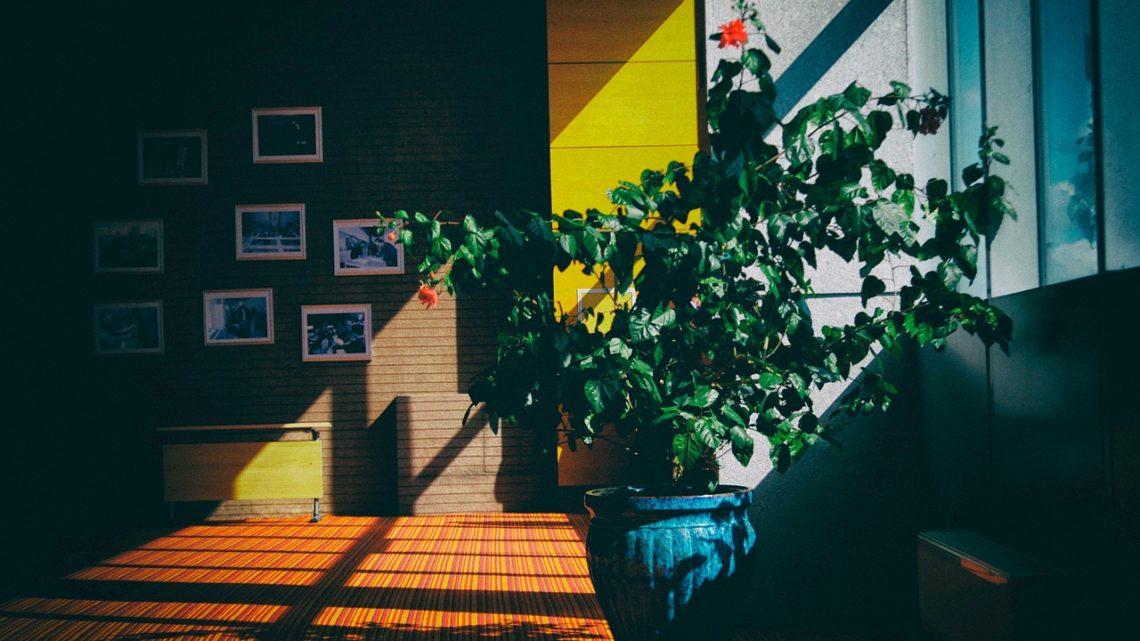 Déco tendance : et si vous misiez sur les plantes décoratives ?